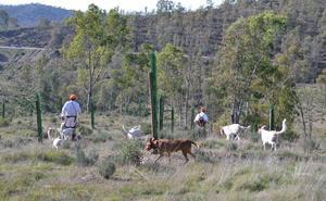 Las lluvias adelantan un mes la montería de Azuaga y se celebrará el próximo sábado