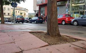 Las raíces de los árboles levantan el suelo en el barrio de Rosal de Ayala de Plasencia