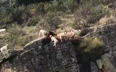 Cazadores y animalistas discrepan del eco de las imágenes de una cacería en la provincia de Cáceres