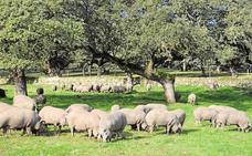 La Junta subvencionará a las explotaciones agrarias que apuesten por la economía verde