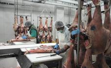 La Junta anima a los productores de ibérico a sacrificar aquí más cerdos criados en la región