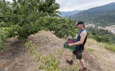 El Jerte celebrará unas jornadas sobre los beneficios de la agricultura ecológica