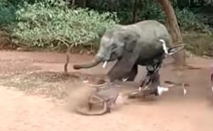 Elefante enfurecido