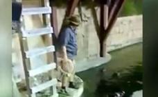 ¡Al agua con los caimanes!