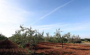 La superficie de almendro llegará a las 10.000 hectáreas en 2021