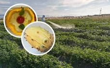 El kiwano del Kalahari ya se cultiva en la comarca de Campo Arañuelo