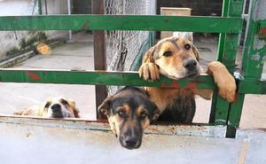 Más de cien perros siguen en la protectora de Plasencia pese al aumento de las adopciones