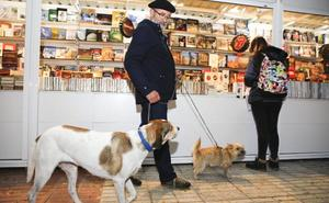 Los veterinarios piden evitar el uso de petardos por el daño a las mascotas