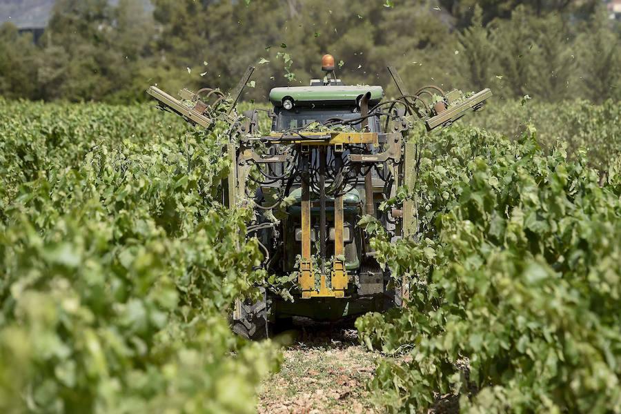 BBVA ofrece facilidades para la renovación del equipamiento agrícola