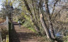 Casi 500 árboles de la ribera de Plasencia están muertos o enfermos