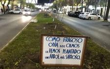 Arrancan los árboles que los vecinos habían plantado en Carolina Coronado