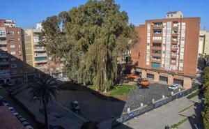 Los vecinos de Santa Marina anuncian movilizaciones si se mantienen los eucaliptos