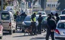 Intervienen más de 400 plantas de marihuana en la operación antidroga de Badajoz