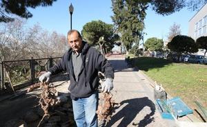 Reponen el firme dañado por las raíces de varios árboles en Mérida