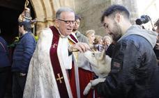 La tradición de San Antón en Cáceres atrae a decenas de perros