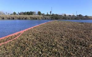 Las barreras del río para impedir la entrada de camalote estarán listas en primavera
