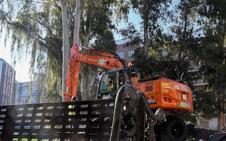 Medio Ambiente da su visto bueno a talar los eucaliptos de la plaza de Santa Marta de Badajoz