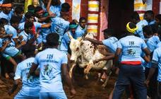 'Jallikattu' la fiesta tradicional del toro hindú