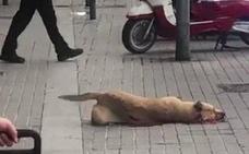 La actuación del policía que mató a una perra en Barcelona fue «defensiva y proporcional»