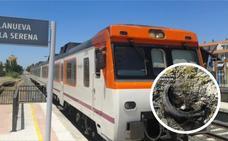 Once niños identificados por los sabotajes del tren en Villanueva