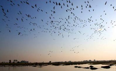 Extremadura celebra el Día de los Humedales con rutas y observación de aves