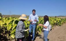 Convocan tres cursos de formación agrícola para mujeres en Jaraíz