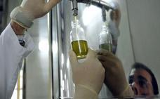 La producción de aceite de oliva en el primer trimestre de campaña es de 48.000 toneladas