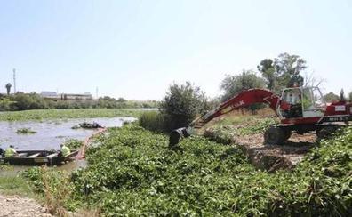 Mérida aborda mañana el protocolo hispano-luso de control del camalote