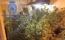 Dos detenidos por cultivar marihuana en un trastero de Mérida