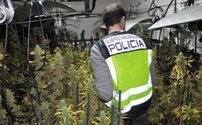 Cuatro detenidos por cultivar marihuana en una finca entre Valverde de Mérida y la capital autonómica