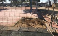 Quitan el árbol de la pista multideportiva de Almendralejo