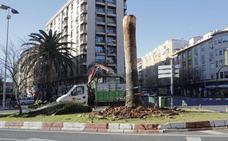 Último paso para librar a la palmera de la plaza de América de Cáceres del picudo rojo