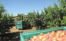 La Cámara de Comercio de Badajoz organiza una misión comercial a Fruit Logística de Berlín