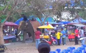Reacción del elefante