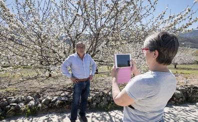 La Fiesta del Cerezo en Flor se celebrará del 16 de marzo al 3 de mayo y llevará actividades a once pueblos de la comarca