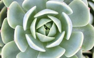 Cactus para coleccionistas en El Corte Inglés