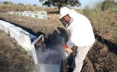 Las importaciones a bajo precio desde China siguen bloqueando la venta de miel española