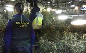Marihuana extremeña con destino a Europa