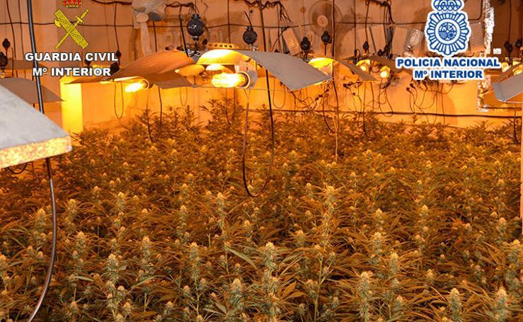 Desarticulado un clan familiar chino que plantaba y exportaba marihuana desde Extremadura