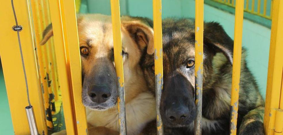 La reforma de la perrera obligará a sacar a la mitad de los animales este mes