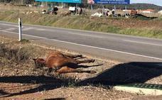 Un caballo provoca un accidente con un camión en Los Santos de Maimona