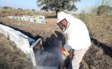 Cooperativas Agro-alimentarias celebra la nueva propuesta de Agricultura sobre el etiquetado de la miel