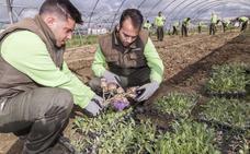 Convocadas las ayudas para el fomento de la economía verde en las explotaciones agrarias
