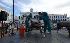 La matanza tradicional de Llerena estrena este fin de semana título de Interés Turístico Regional