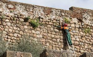 Comienza la limpieza de la muralla de Plasencia
