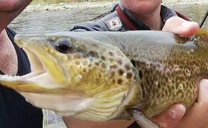 Los pescadores de truchas critican la política de salmónidos de la Junta