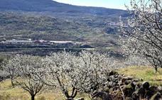 Los cerezos del Valle del Jerte empiezan a florecer