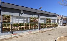 La Escuela de Música de Castuera estrena el primer jardín vertical del pueblo