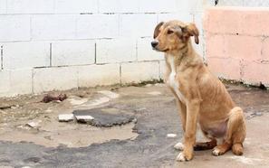 «Solo pedimos un espacio para los animales de Zafra»