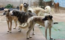 El refugio canino de Zafra lucha para no desaparecer